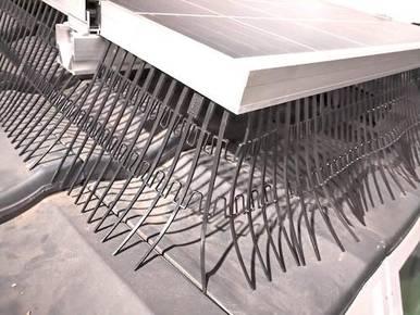 Photovoltaik Vogelschutz